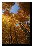Couleurs d'automne en sous-bois