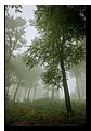 Fôret vosgienne sous la brume